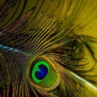 """Взгляд"" павлина... :: isanit Sergey Breus"