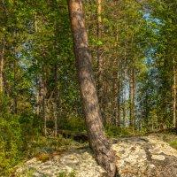 И на камнях растут деревья :: Владимир Брагилевский