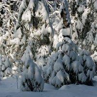 Зимний лес :: Виктор Х.