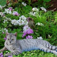 нектарница и кошка :: Александр Деревяшкин