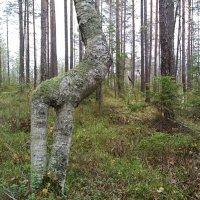Дерево - Жираф :: Олег Гаврилов