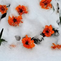 Первый снег. :: Александр Зуев
