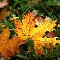 Колорит Осени :: VADIM *****