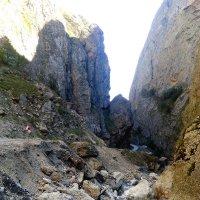 В горох Кавказа :: Алла ZALLA