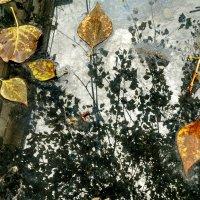 Дождливый день :: Tanja Gerster