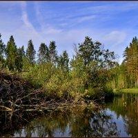 Река Саркойоки. Бобровая хатка. :: Владимир Ильич Батарин
