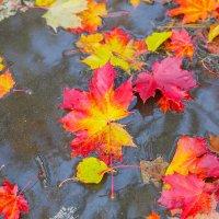Еще одна Осень :: Алексей Сопельняк
