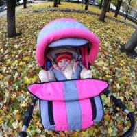 На ковре из желтых листьев... :: Борис Гуревич