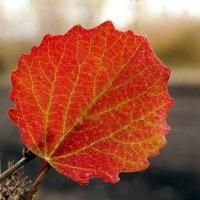 Багрянец листьев осиновых... :: Андрей Заломленков