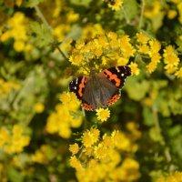 бабочка :: Никита Козырев