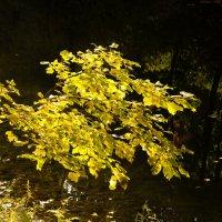 Осеннее золото :: Александра