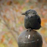 птица :: Руслан