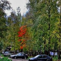 Осенний дворик. :: Sergey Serebrykov