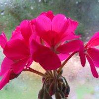 И снова дождь стучит в окно... :: Светлана