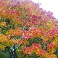 осенняя  листва :: Наталья Чернушкина