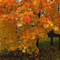 Почти красный октябрь :: Андрей Лукьянов