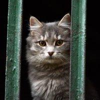 Кошка :: Олег Шендерюк