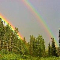 Радуга над лесом :: Сергей Чиняев