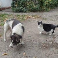 Пёс Бим и кошка Шанти!... :: Алекс Аро Аро