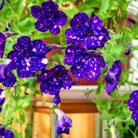 Цветы. :: Иван