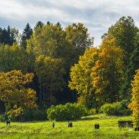 Краски Осени - 4 :: Александр Петров