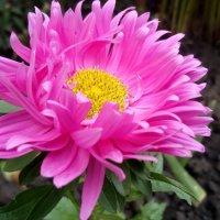 Осенние цветы :: Serg