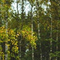 Осенний пейзаж :: Ксения Трифонова