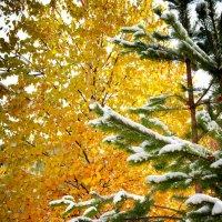 Снежная осень :: Sadi Omarov