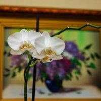 Орхидея. :: Иван