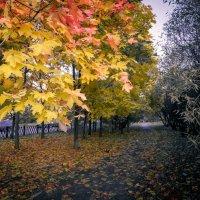 Осенняя позолота :: Сергей Балкунов