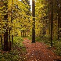 Осенняя тропа :: Сергей Розанов