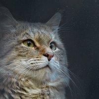 Степной кот. :: Виктор Шпаков
