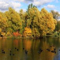 Осень в Ботаническом саду. (5) :: Николай Кондаков