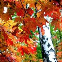 Осенние листья шумят и шумят в саду... :: Валерия  Полещикова