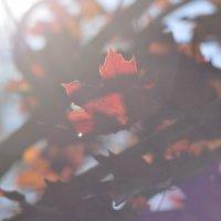 краски осени :: олеся тронько