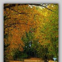 Осенняя дорога :: Михаил Цегалко