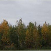 Осень в Иматре :: Вера