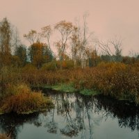 Закат на болоте. :: Елена Михайлова .