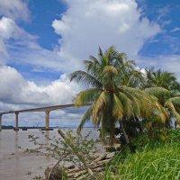 Мост на реке Суринам :: Андрей K.