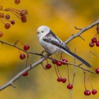 Птица в яблоках :: Елена Шел