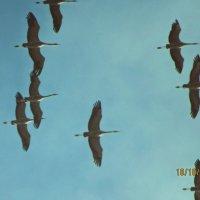 журавли полетели... :: mAri