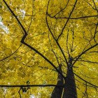 осень...просто...ОСЕНЬ. :: Геннадий Свистов