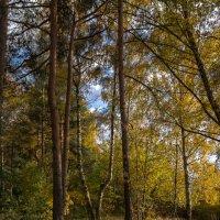 Осень. :: Лариса *