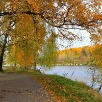 Березки у Джамгаровского пруда. :: Николай Кондаков