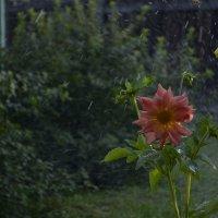 Цветок :: Ольга Озонова