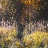 тропинка в лес :: Ольга (Кошкотень) Медведева