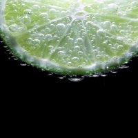 Citrus aurantiifolia :: Roamer Pon