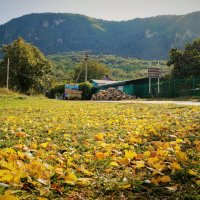 Осень в Нижегородском. Желтое на зеленом :: Gal` ka