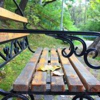 В парке. :: Елена Тимонова