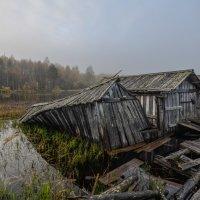 Туманное утро на Гимольском озере :: Наталья Левина